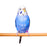 Living World Wooden Perches 19 in 2-pack - New York Bird Supply