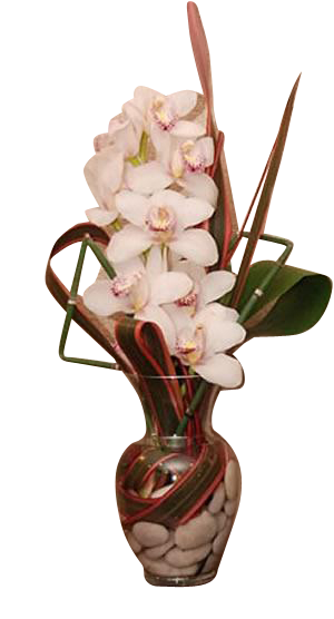Vase Arrangement Orchid Medium