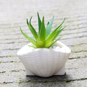 decorative white Seashell Garden Pot Set