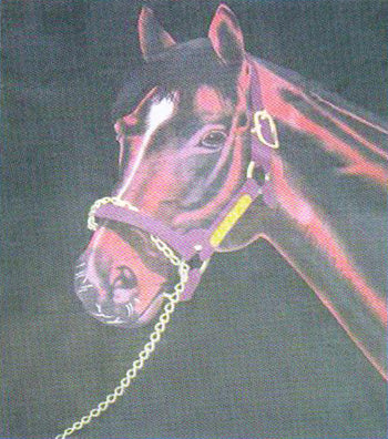 Fleece 50x60 Throw Blanket Horse Portrait 508