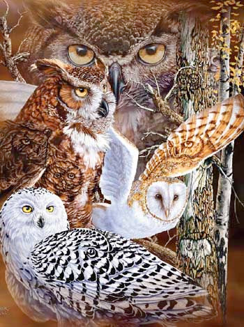 Blanket Queen Signature- Bird Ct- 11 Owls