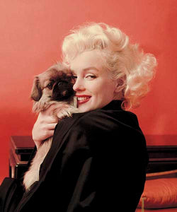 Blanket Queen DGA Signature- Marilyn Monroe and Puppy