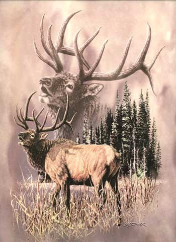 Blanket Queen Signature- Deer Ct- Elk Call