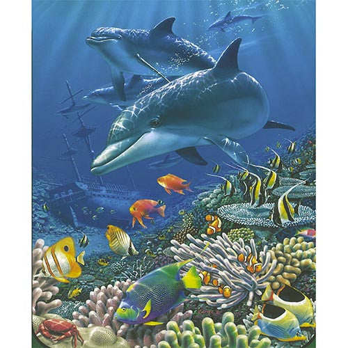 Blanket Queen Signature- Car Ct- JQ Shipwreck Dolphins