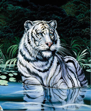 Blanket Queen Signature- Tiger Ct- Wading White Tiger