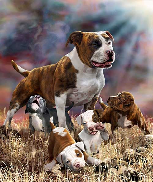 Blanket Queen Signature- Wolf Ct- Pitbull and Puppies