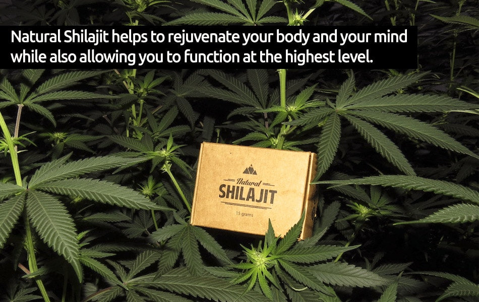Natural Shilajit Resin: The Cannabis High