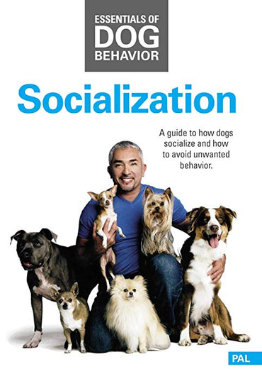 DVD Essentials of Dog Behavior:  Socialization