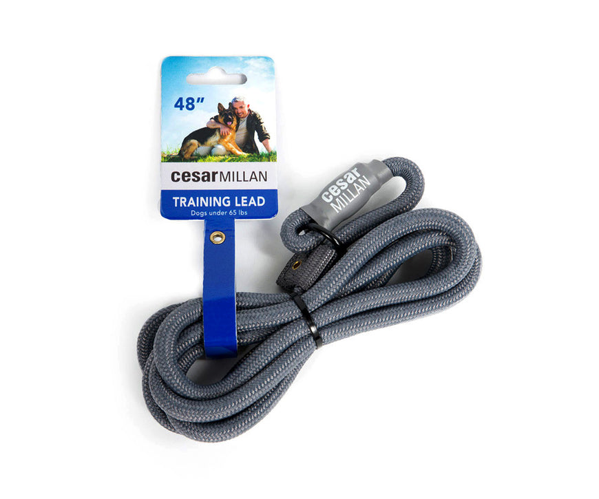 (Trainer PRODUCT) l Cesar Millan Training Lead