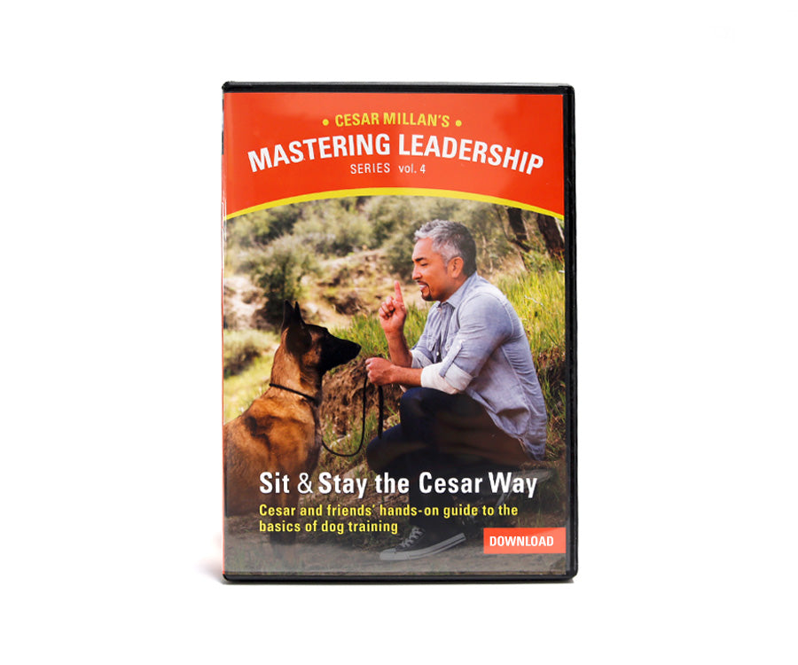 DVD Mastering Leadership Vol 4. Sit & Stay the Cesar Way