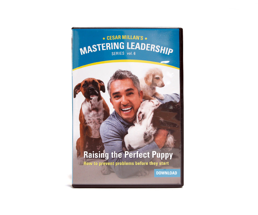 Mastering Leadership Vol 6. Raising the Perfect Puppy - Digital Download