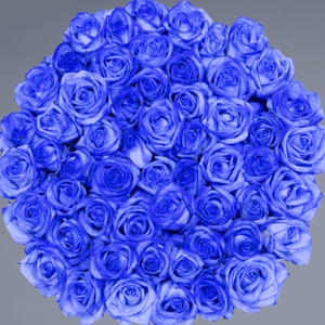 Royal Blue | Small Square White Box - Legendary Roses
