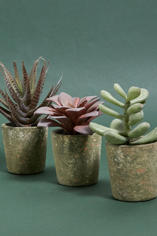 Assorted Faux Potted Succulent