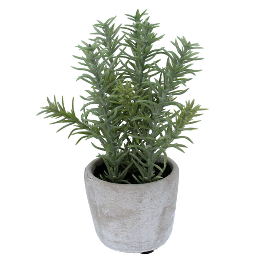 Gisela Graham Faux Rosemary Flowers in Pot