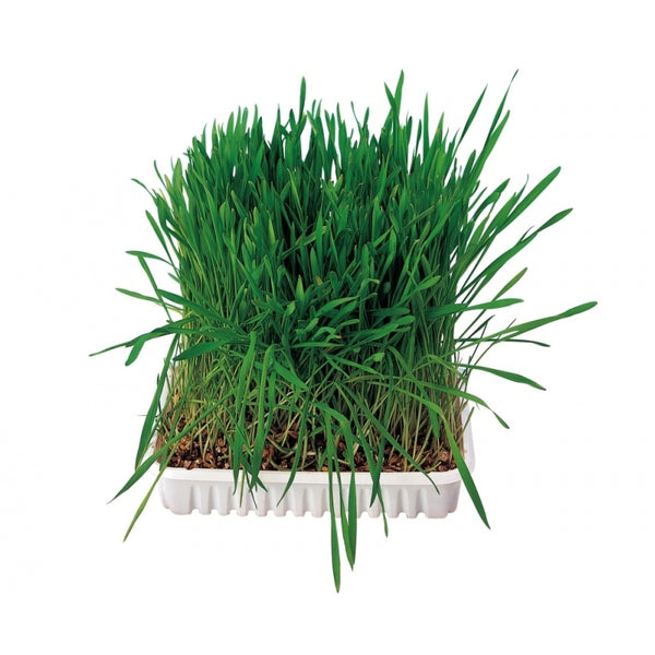 Trixie Small Animal Grass - 100g