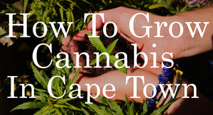 How to Grow Cannabis In Cape Town - A Simple, Practical Guide