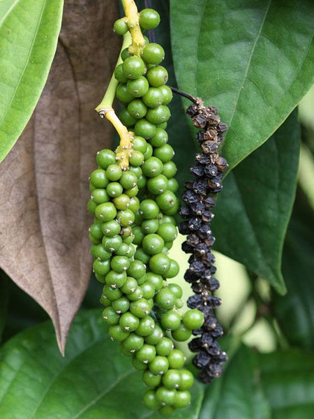 Black Pepper (Organic)