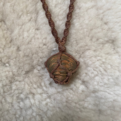 Trilobites necklace