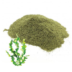 Kelp Powder (Wild Harvest, Organic)