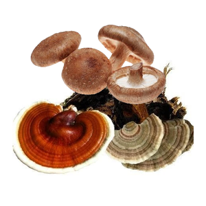 Mushroom Blend (reishi, shiitake, turkey tail)