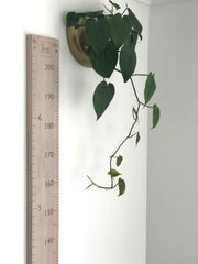 Feet and cm height chart in whitewash or natural recycled rimu