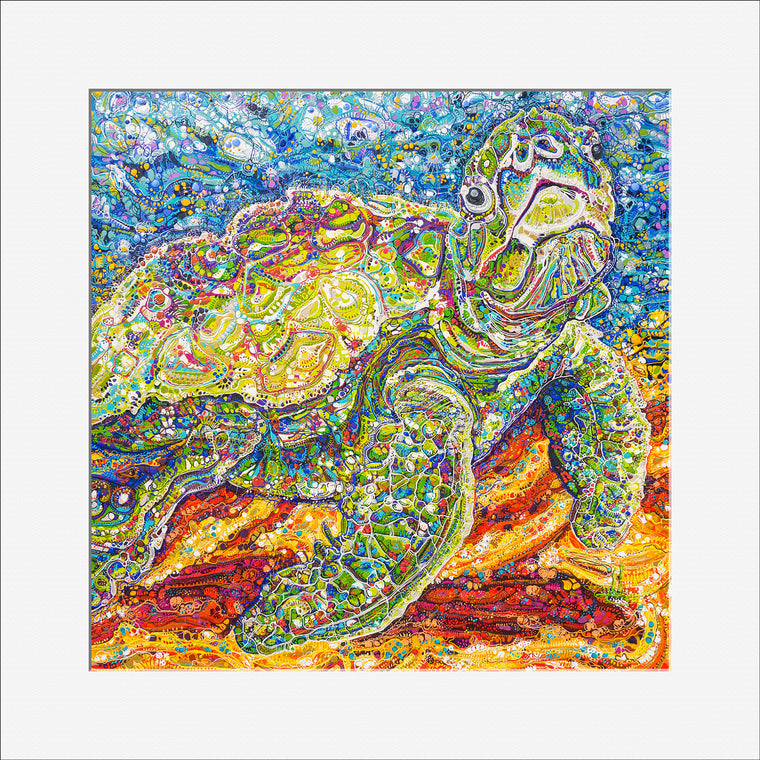 'Thomas Turtle' 30cm x 30cm OPEN-EDITION Print