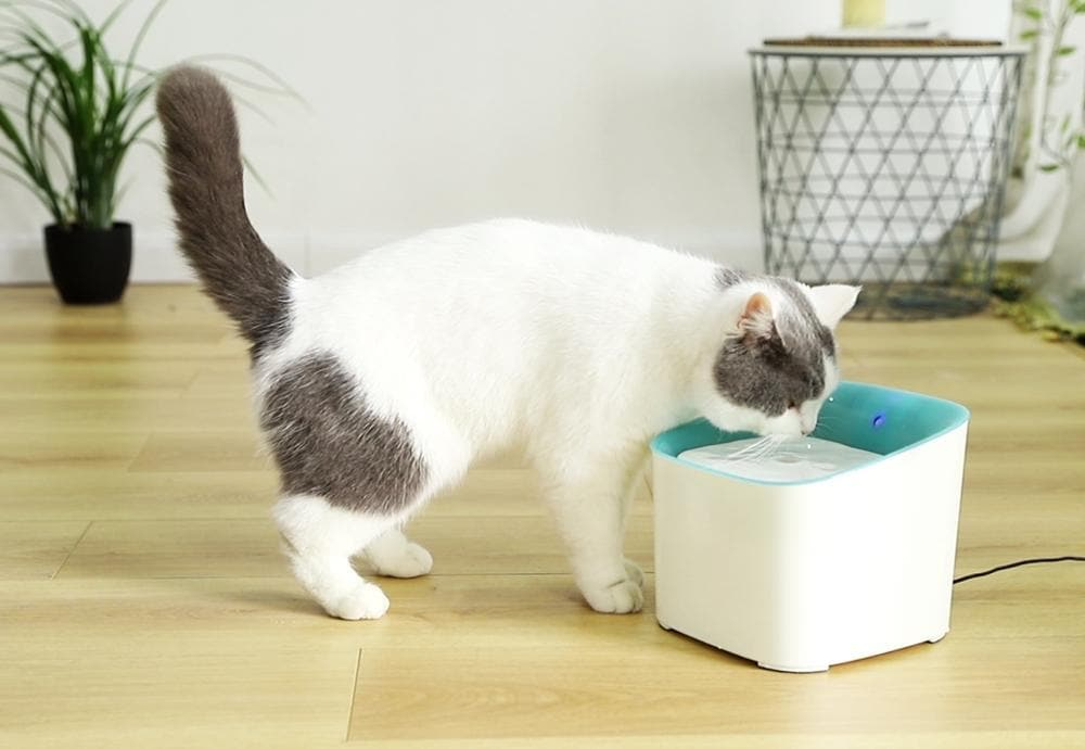 PawsnCollars Automatic Filtered Water Dispenser For Cats & Dogs