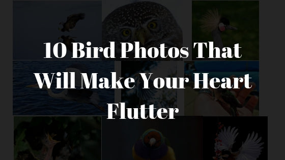 10 Bird Photos That Will Make Your Heart Flutter