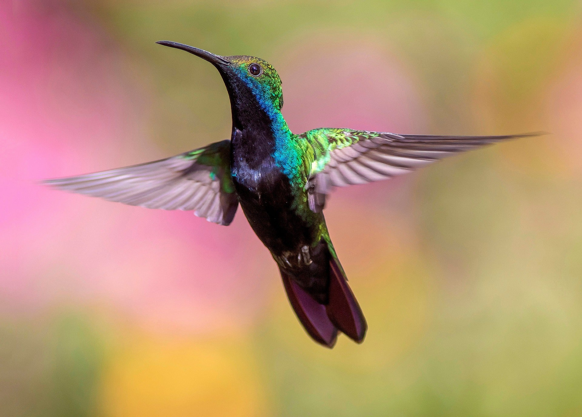 10 Fun Hummingbird Facts