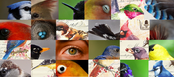 Quiz: What Bird Are You?