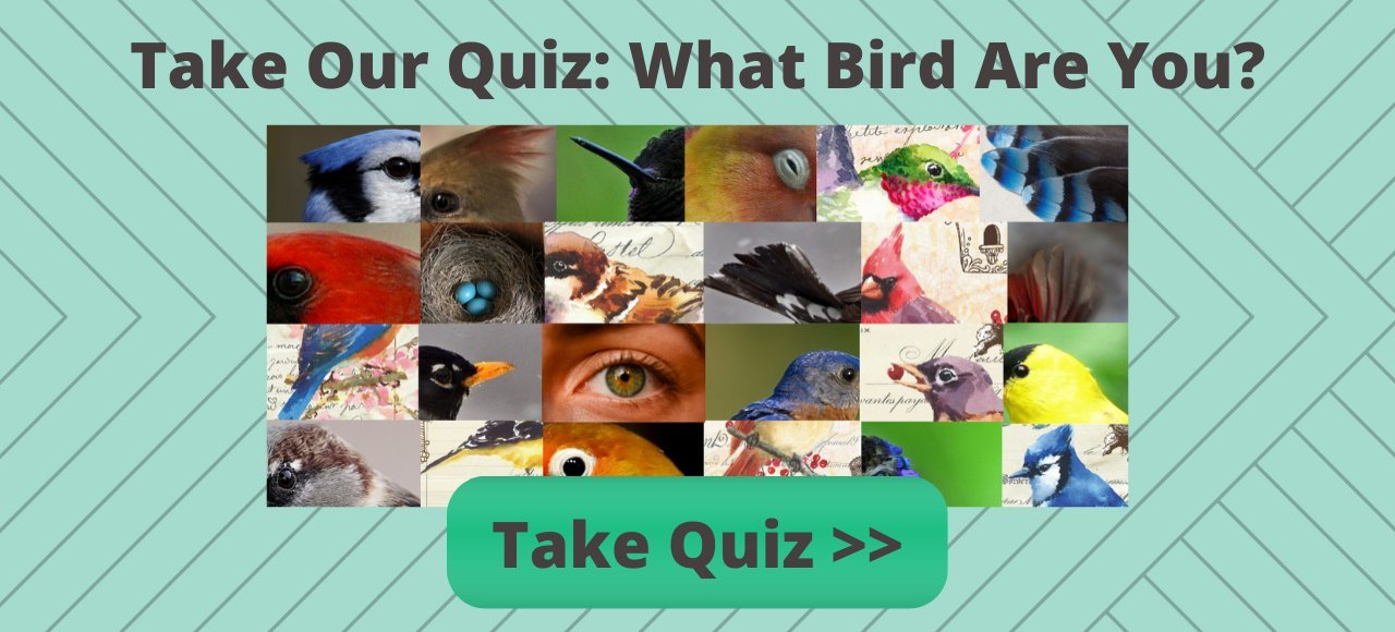 Take What Bird Are You Quiz?
