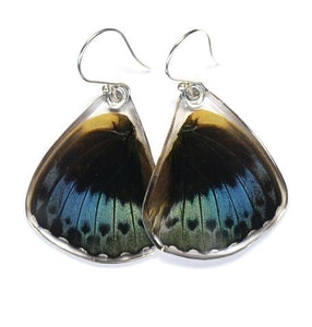 Archduke Butterfly Wing Earrings