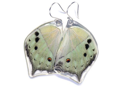 Salamis Parhasus Butterfly Wing Earrings