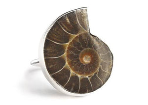 Ammonite Fossil Ring in Sterling Silver