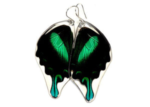 Peacock Swallowtail Butterfly Wing Earrings