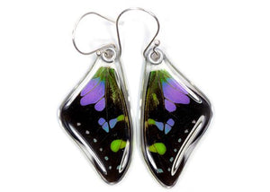 Purple Spotted Swallowtail Butterfly Wing Earrings