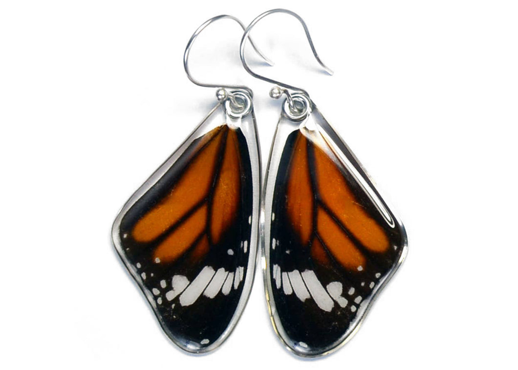 Striped Tiger Butterfly Wing Earrings