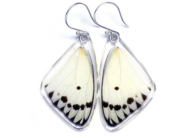 Calypso Caper Butterfly Wing Earrings