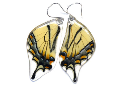 Eastern Tiger Swallowtail Butterfly Wing Earrings