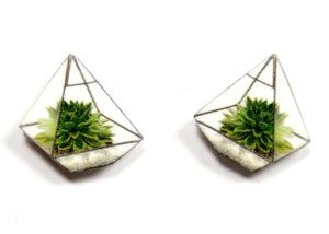Terrarium Stud Earrings