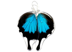 Mountain Blue Swallowtail Butterfly Wing Earrings