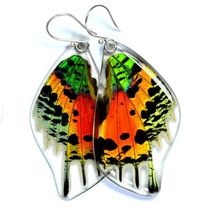 Sunset Moth Butterfly Wing Earrings