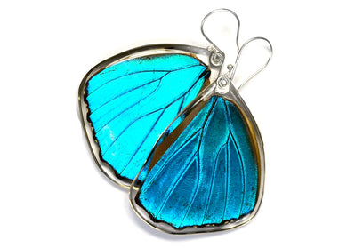 Blue Morpho Butterfly Wing Earrings (Lower)