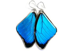Blue Morpho Butterfly Wing Earrings (Upper)
