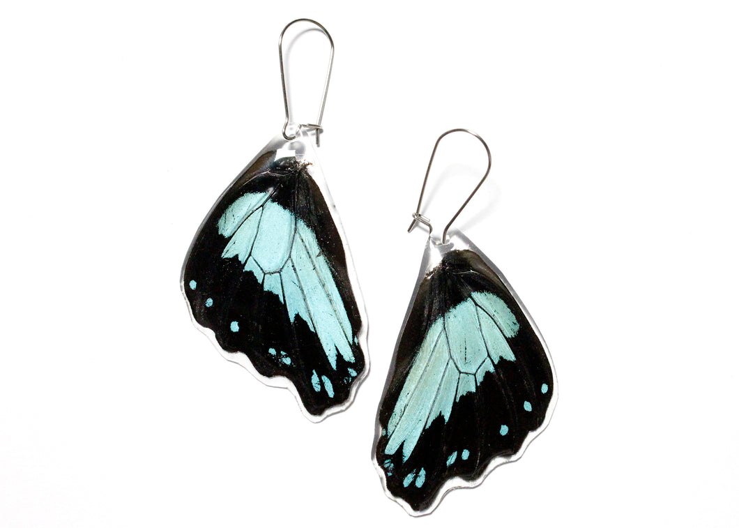 Blue Swallowtail Butterfly Wing Earrings