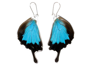 Giant Blue & Black Butterfly Wing Earrings