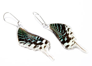 Green Banded Butterfly Wing Earrings (Lower)