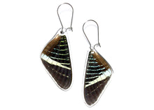 Green Banded Swallowtail Butterfly Wing Earrings (Upper)