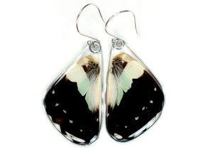 Pale Green Triangle Butterfly Wing Earrings
