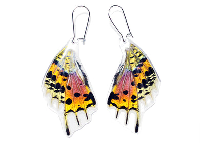 Rainbow Sunset Moth Butterfly Wing Earrings